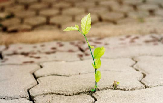 地面から力強く生える雑草