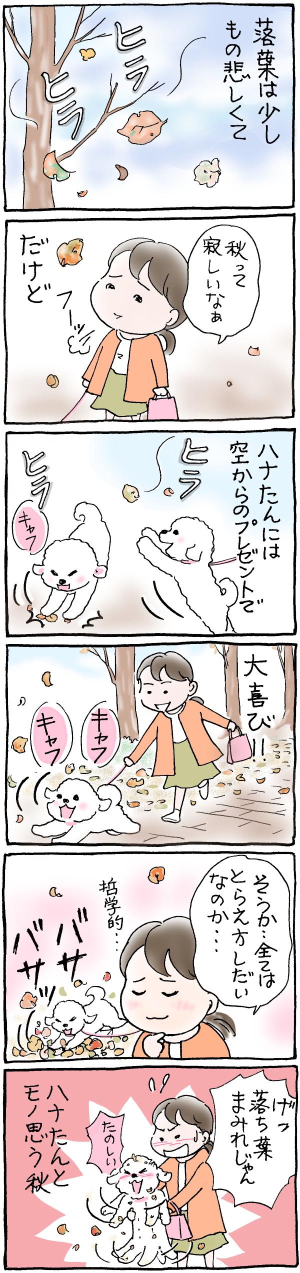 ハナちゃんと落ち葉