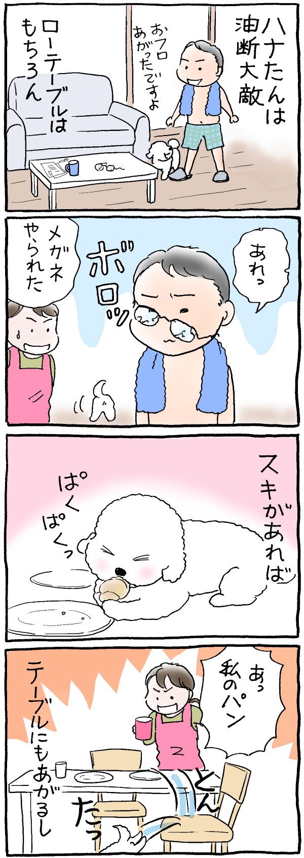 ハナちゃん大掃除1