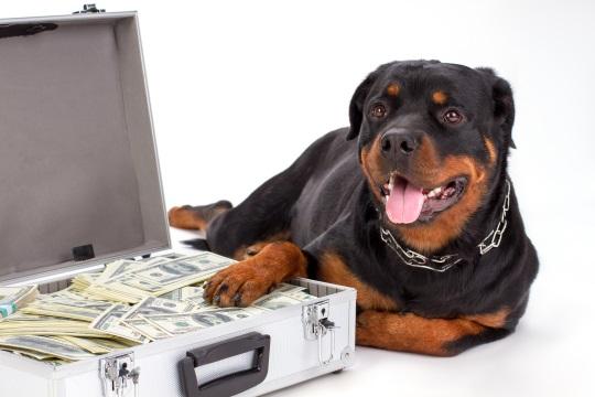お金を守る番犬
